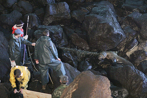 Rescuers making way to sea lion