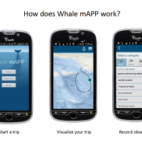 Assessment of Citizen Science Collected Via Whale Mapp, an Android Phone App