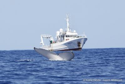 boat and fluke