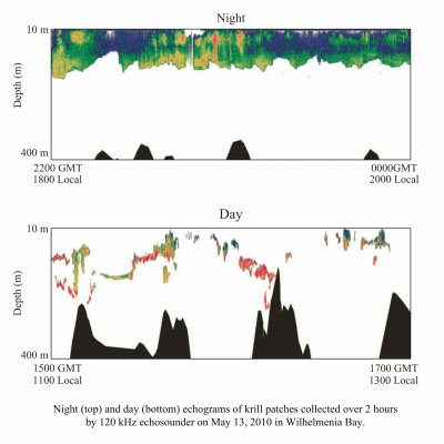 Antarctic Krill Patch From Day to Night