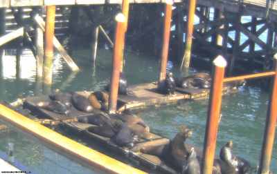 Sea Lion Webcam