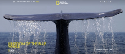 blue whale fluke with National Geographic branding