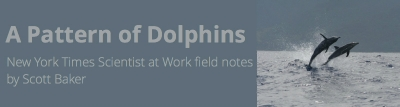 A Pattern of Dolphins New York Times Scientist at Work field notes by Scott Baker