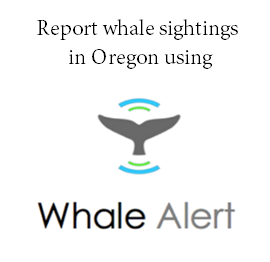 Report whale sightings with Whale Alert