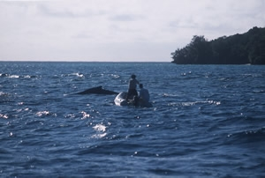 researchers on a raft near a whale