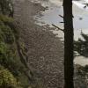 Thousands of sea lions on Heceta Head shore