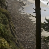 Thousands of sea lions on Heceta Head shore